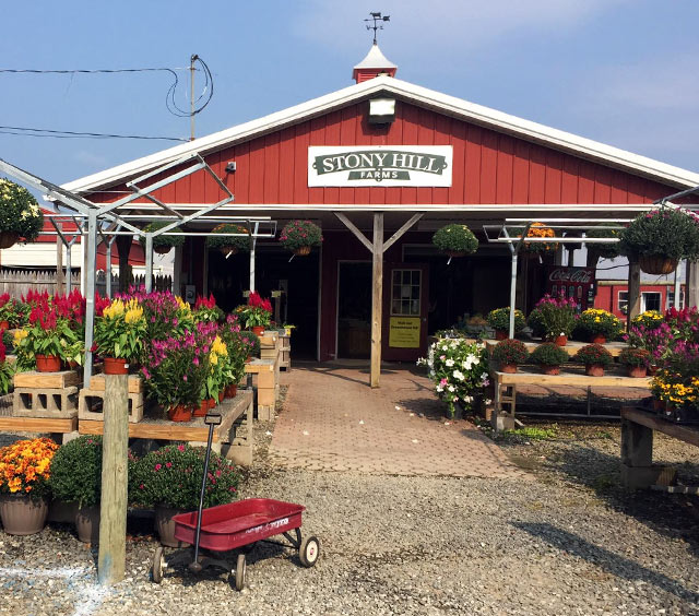 NJ Farm Market - Chester, NJ - Produce, plants, baked goods, and more