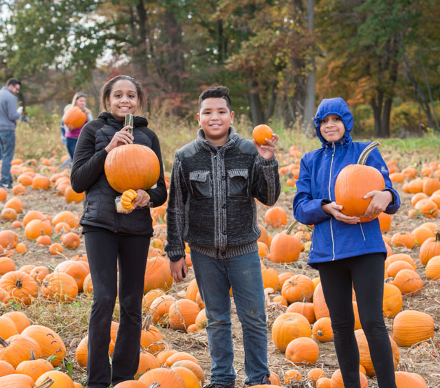 Pumpkin picking at Stony Hill Farms - Chester, NJ