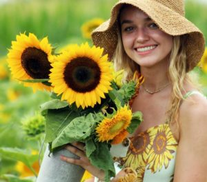 Pick your own sunflowers at the farm