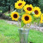 Rustic Sunflower Bucket