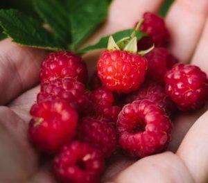 upick-raspberries