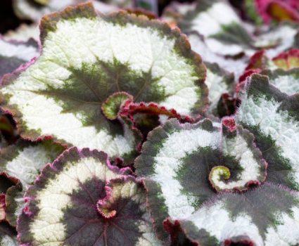gardens-houseplants