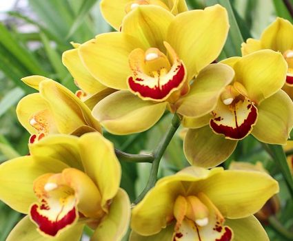 gardens-orchids-yellow-red