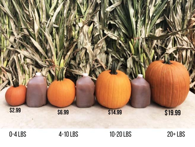 Pumpkin Prices