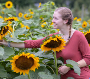 Girl picking sunflowers at the NJ Sunflower Festival