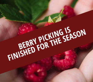 U-Pick Berries Season Over